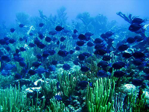 WordPress is like a huge coral reef ecosystem!